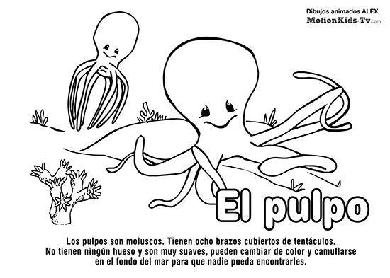 Pulpo Pintas Animales Del Mar Dibujos Colorear Pulpos