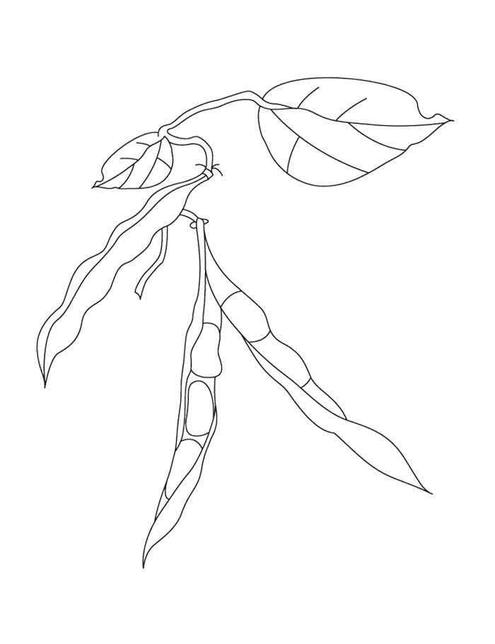 Kidney Beans Coloring Page | Kids Coloring Pages | Pinterest ...