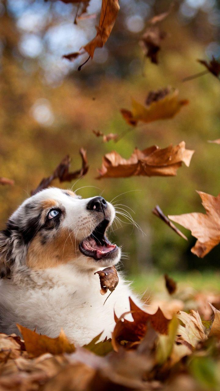 Dogs Autumn Nature Desktop Wallpaper Dog Background Puppy Wallpaper