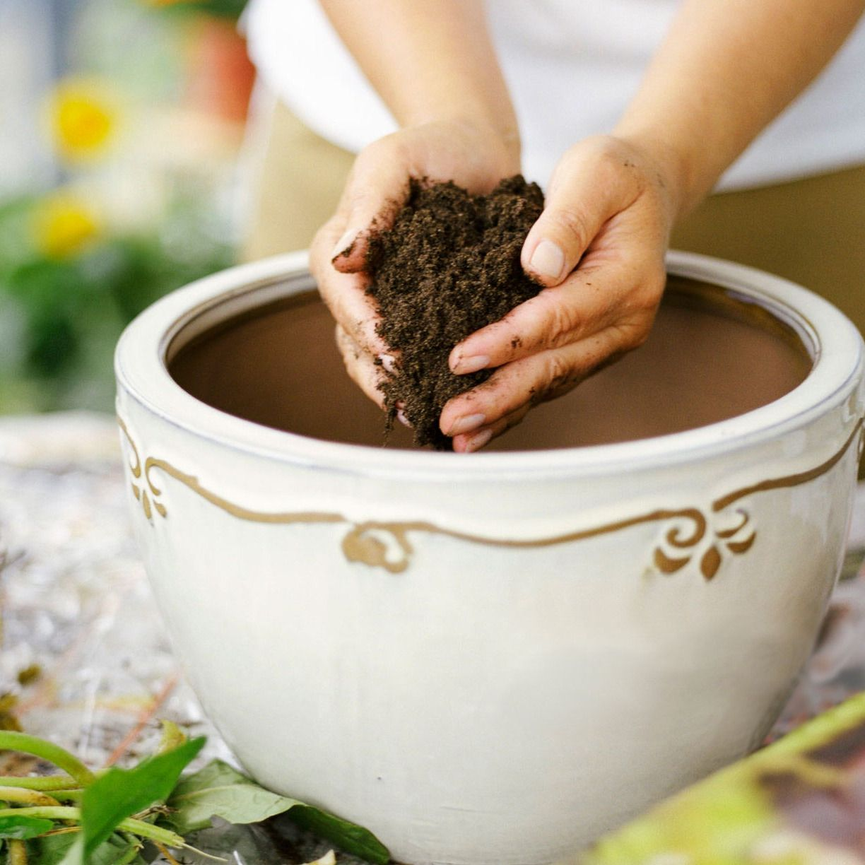 The Best Potting Soil For Every Type Of Plant According 640 x 480