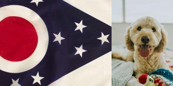 Cavapoo puppies Ohio list of Cavapoo breeders in Ohio