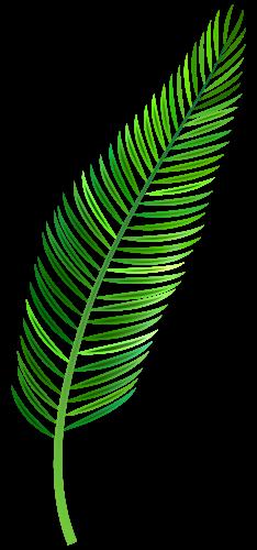 Palm Leaf Png Clip Art Palm Tree Clip Art Palm Frond Art Palm Tree Leaves