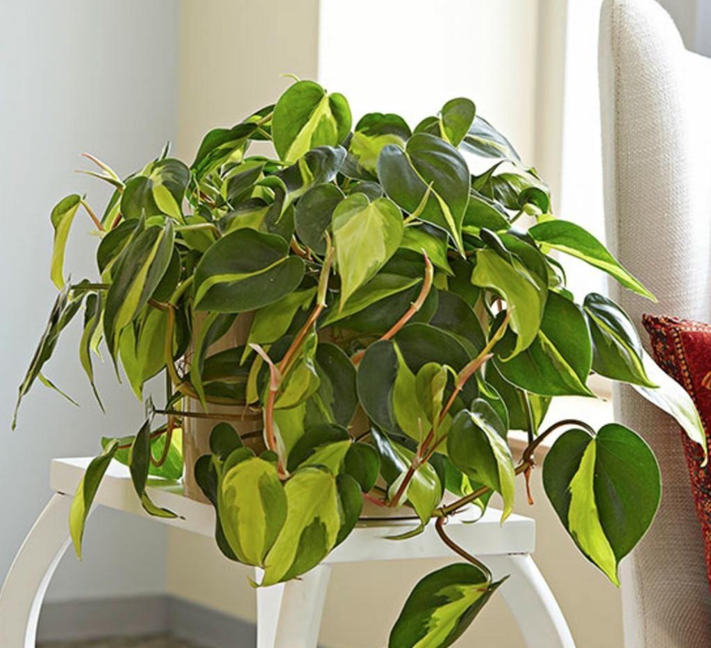 Plante Pour Salle De Bain Sombre 10 plantes zéro lumière qui survivent dans un sous-sol