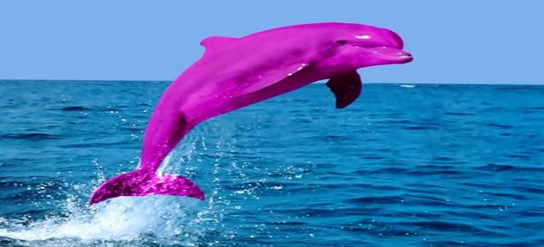 Pink River Dolphin By Vivian Thinglink With Images Dolphins