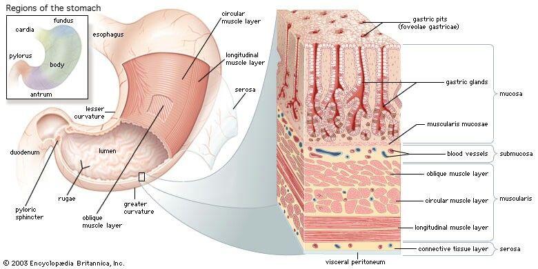 Tratamiento del cáncer de próstata de Portland Oregon
