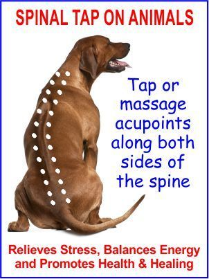 Emotional Freedom Technique Eft Spinal Tap For Dogs