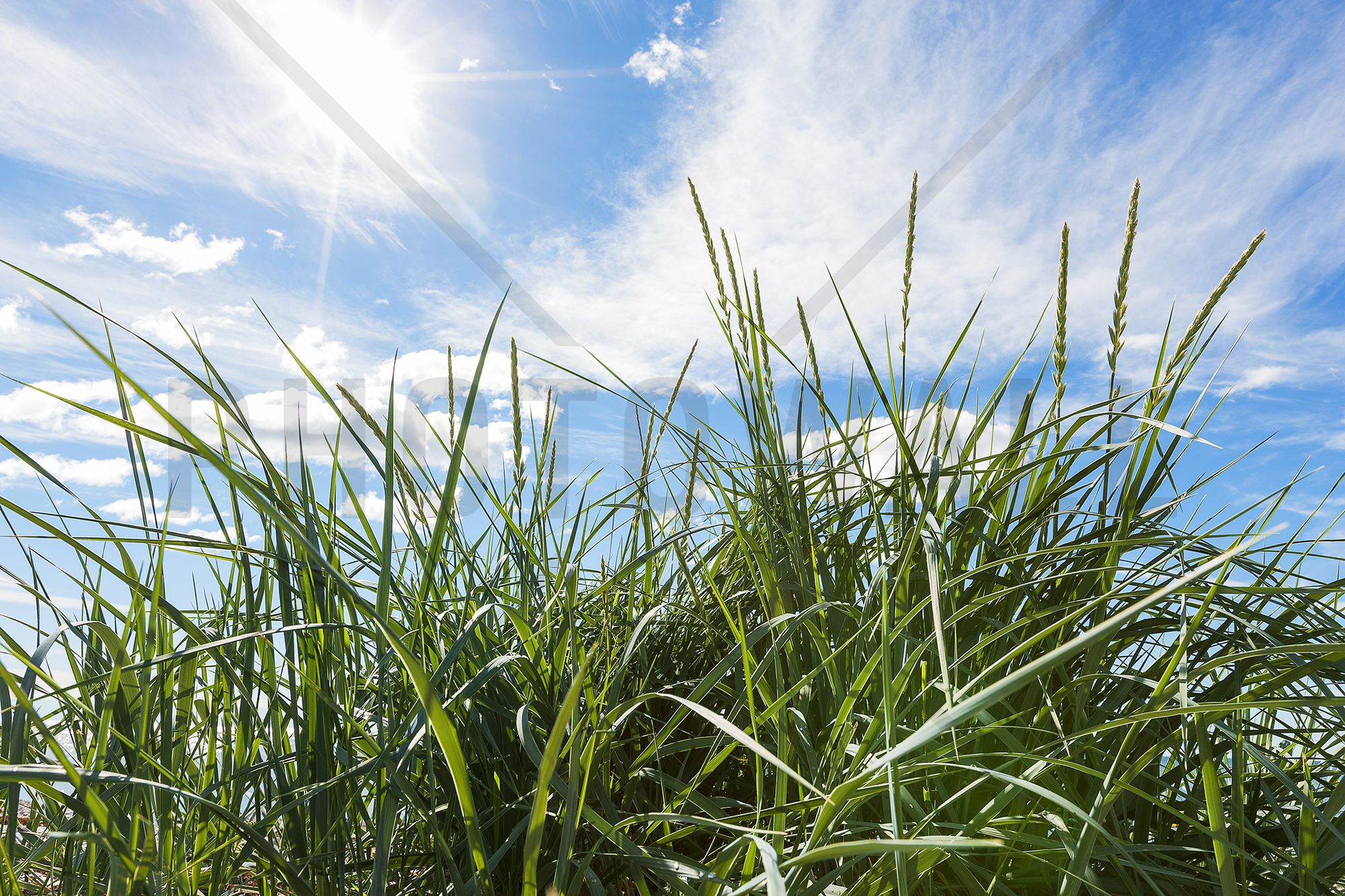 Green Grass & Blue Sky Tavlor på canvas Photowall
