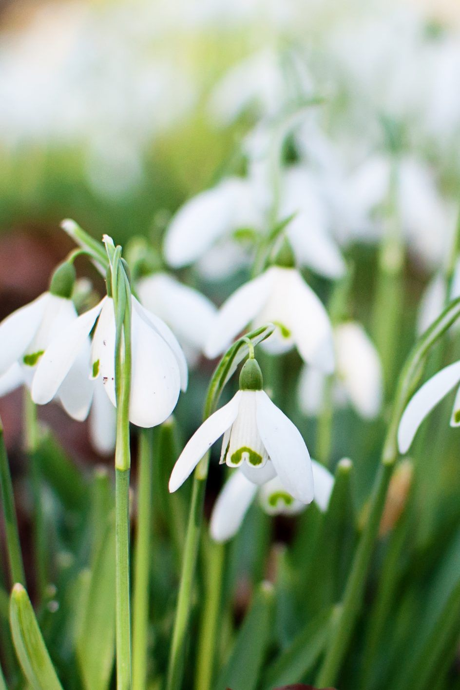 Fall Blooming Bulbs For Your Beds Winter Plants Plants Fall Blooming Flowers