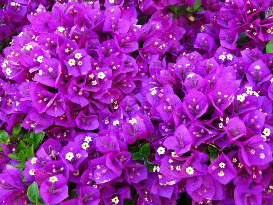 Pin by penny shepherd on purple passion purple colour