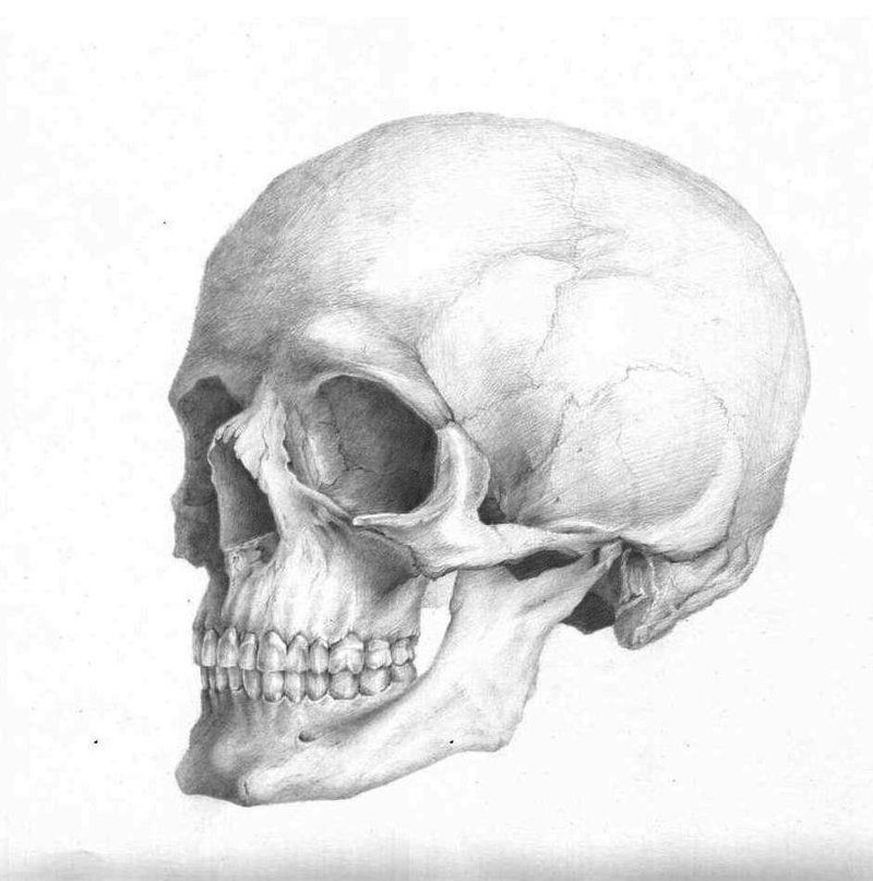 Skull anatomy | April 29, 2010 by uzorpatorica | Skull and bones ...
