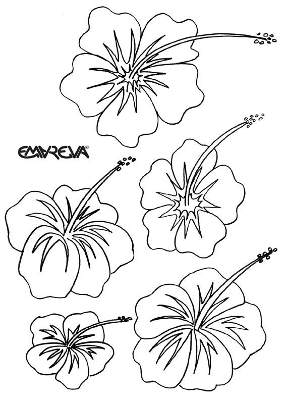 Hawaiian Hibiscus Colouring Pages Flower Drawing Hawaiian Flower Drawing Flower Coloring Pages