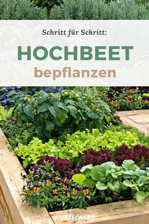 Hochbeet Bepflanzen In 6 Schritten Beispielplan Wurzelwerk In 2020 Hochbeet Bepflanzen Hochbeet Garten Hochbeet
