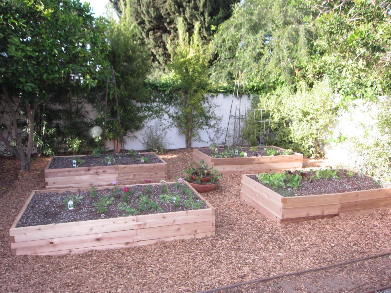 the completed garden will feed the family tasty vegetables year