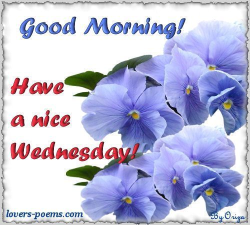 Good Morning! Have A Nice Wednesday! good morning wednesday wednesday quotes good morning quotes happy wednesday good morning wednesday quotes wednesday image quotes happy wednesday morning wednesday morning facebook quotes happy wednesday good morning