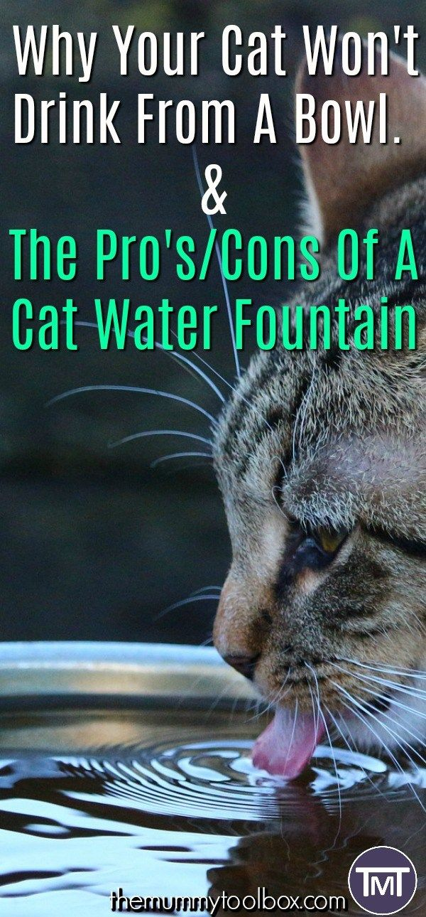 The Pro's And Cons Of A Cat Water Fountain Cat water