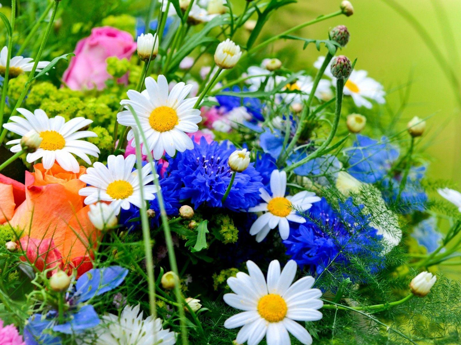 banco de imagenes gratis 12 fotos de flores preciosas en varios colores para compartir - Fotos De Flores Preciosas