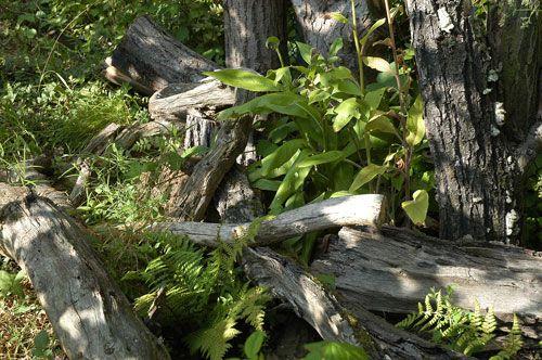 Naturgarten e.V. - Totholz in Wald und Garten
