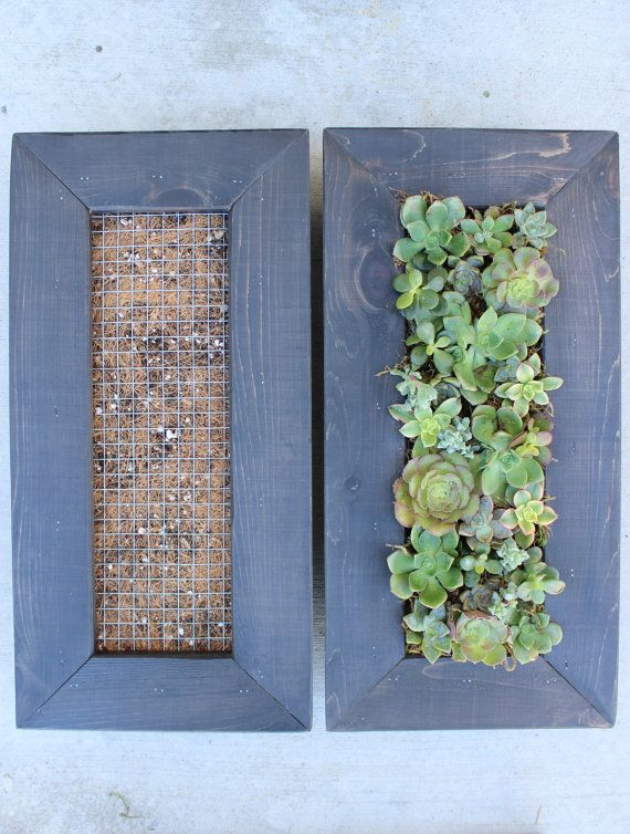 Design Your Very Own Living Wall Hanging Succulent Garden