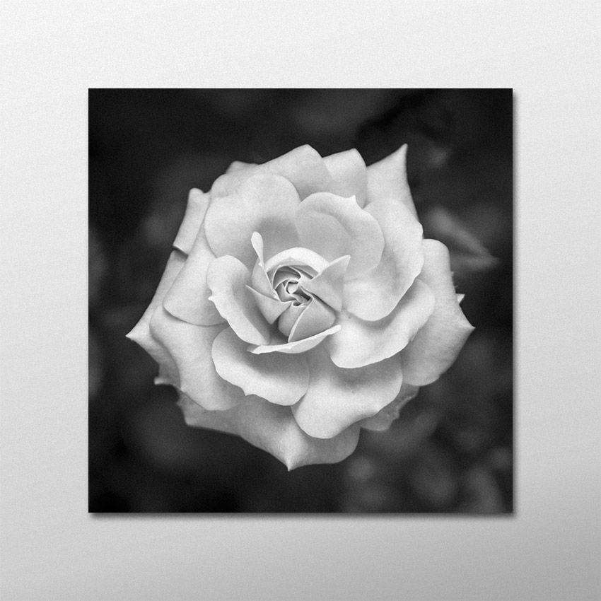 Quadro de rosa em preto e branco: elegância e delicadeza para sua decoração. Autor: Kleber Steinbach
