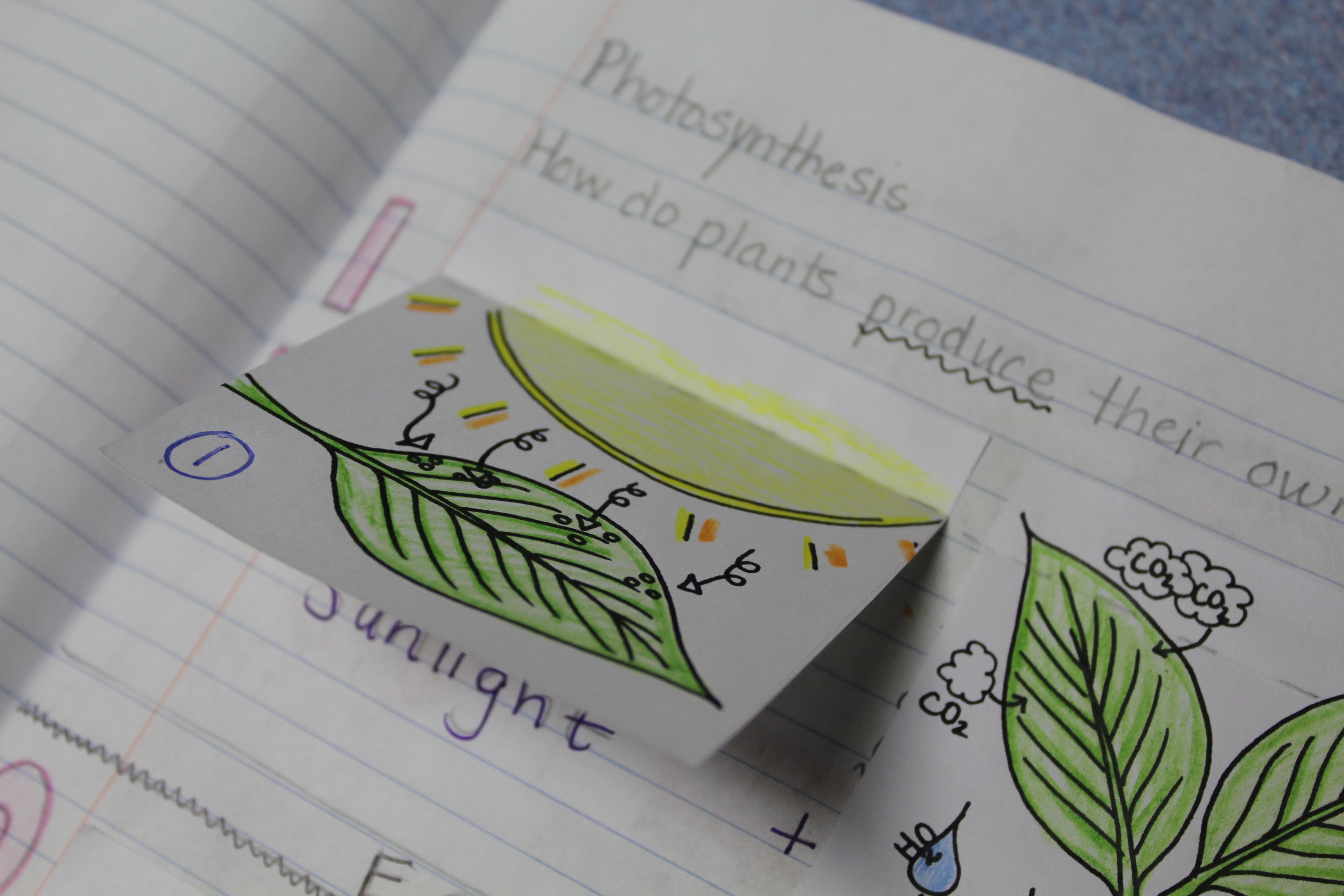 Photosynthesis for interactive notebooks photosynthesis diagram photosynthesis for interactive notebooks ccuart Image collections
