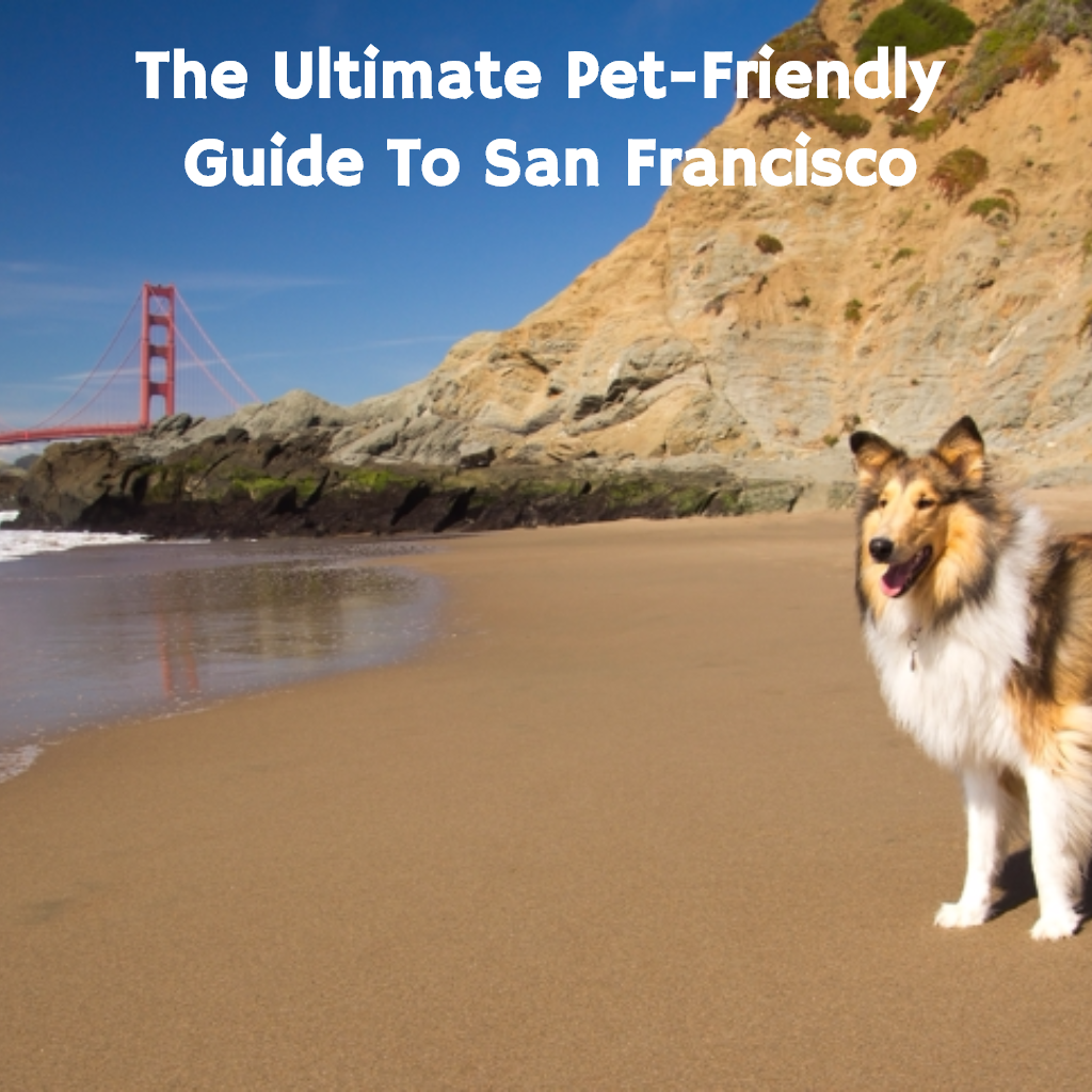 Planning to visit San Francisco, CA? Well now you have no