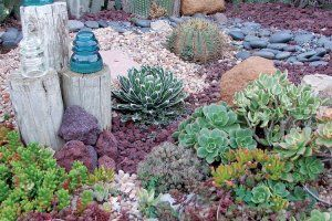 The Islander Magazine For Those Who Love Galveston Succulent Rock Garden Drought Tolerant Garden Succulent Landscape Design