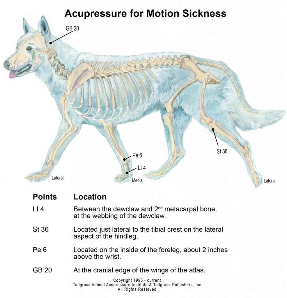 animal acupressure and canine acupressure motion sickness chart [ 986 x 1024 Pixel ]