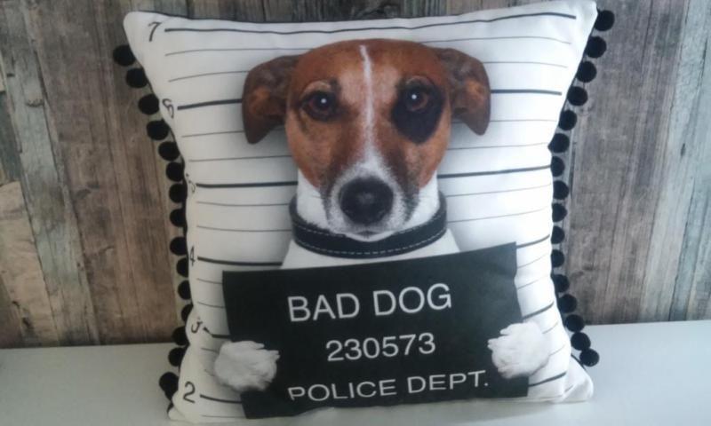 Bad Dog Nein So Böse Ist Dieser Kleine Jack Russel Gar Nicht