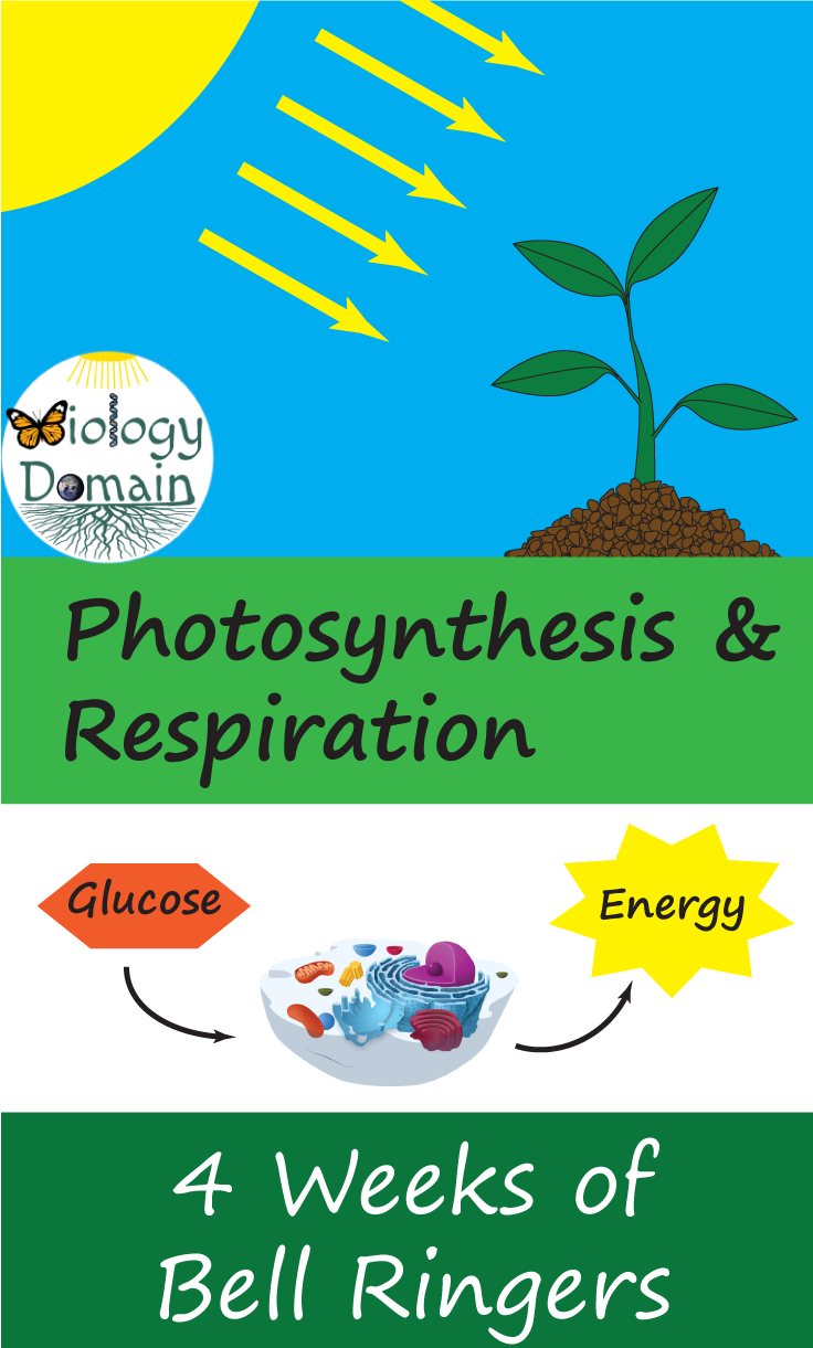 Four Weeks Of Photosynthesis And Cell Respiration Bellringers With Handouts For Student Cell Respiration Photosynthesis And Cellular Respiration Photosynthesis [ 1221 x 736 Pixel ]
