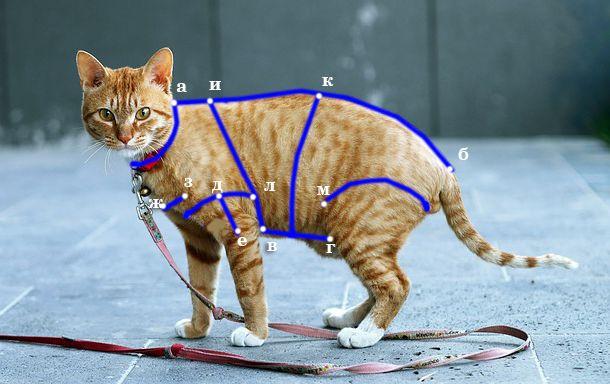 выкройки для кошек своими руками шитье одежды для кота кошачья