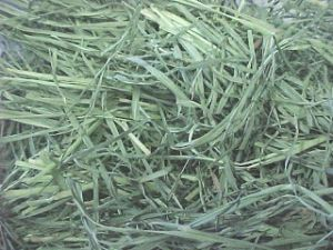 PREMIUM TIMOTHY Hay Direct from farmer in Newmarket