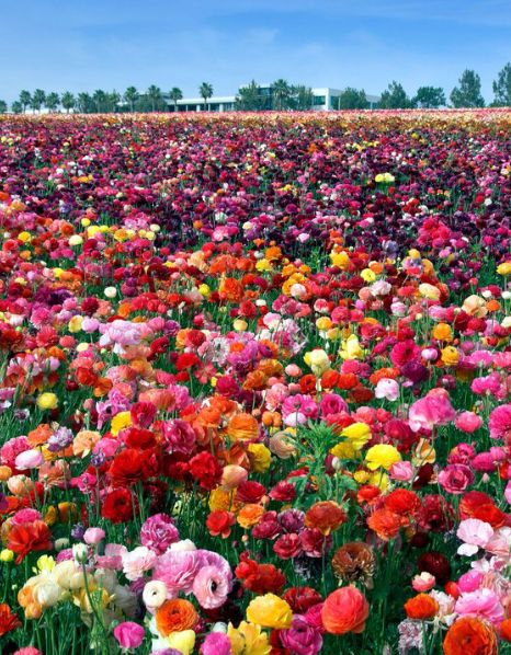 8 Places To See Americas Most Beautiful Spring Flowers California