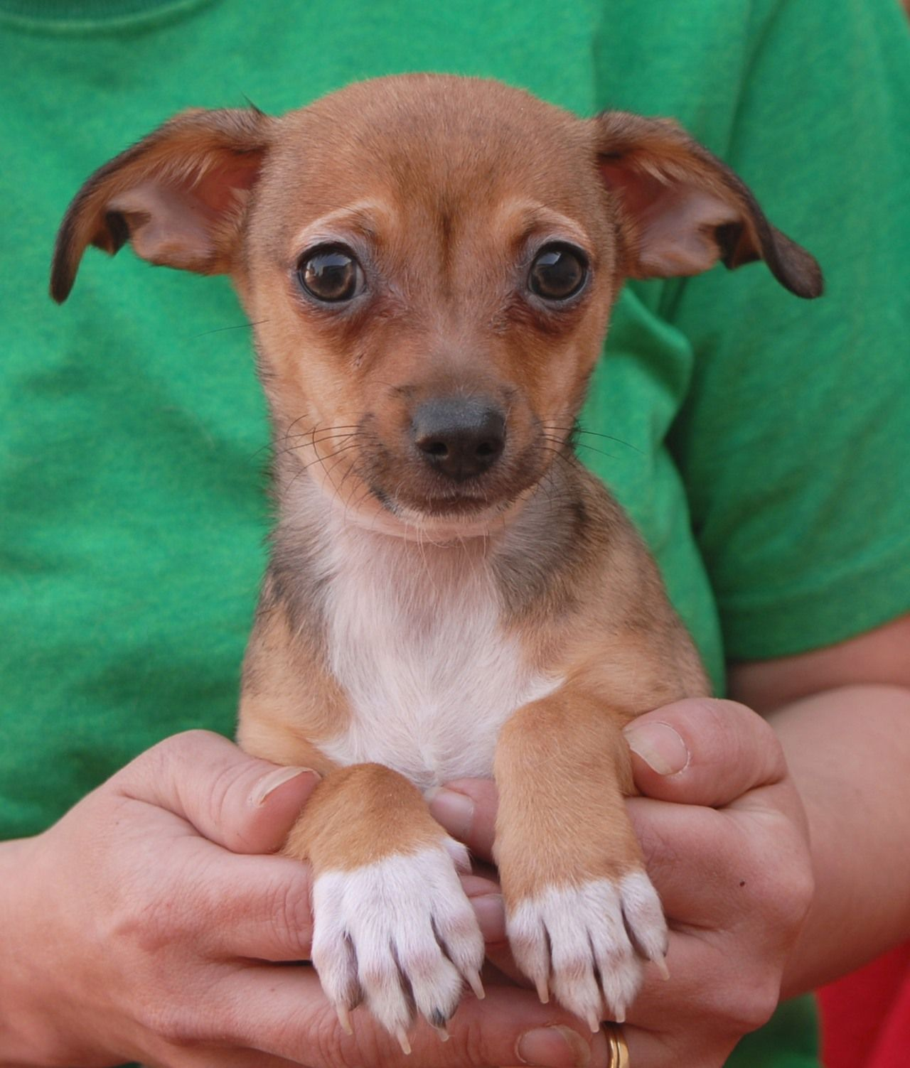 """Hank, baby boy 1 of 5 """"Fairy Tale Puppies"""" debuting for"""