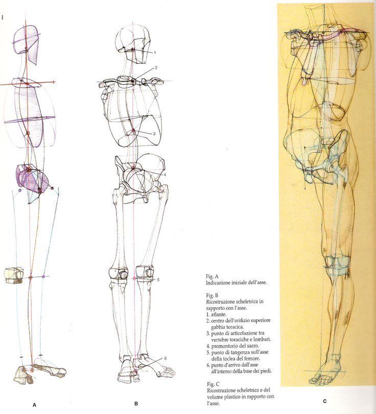 Академический рисунок | MODELOS CUERPO HUMANO | Pinterest | Anatomía ...