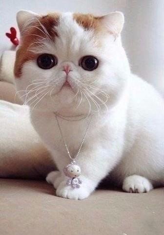 Cat Cute Garfield