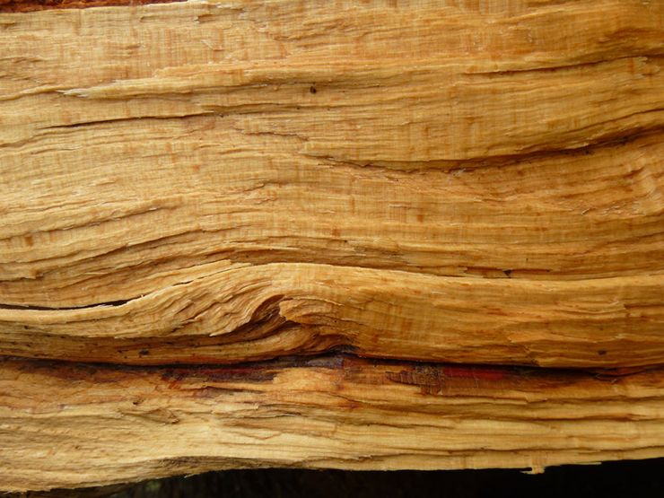 20 free high resolution wood textures download wood texture