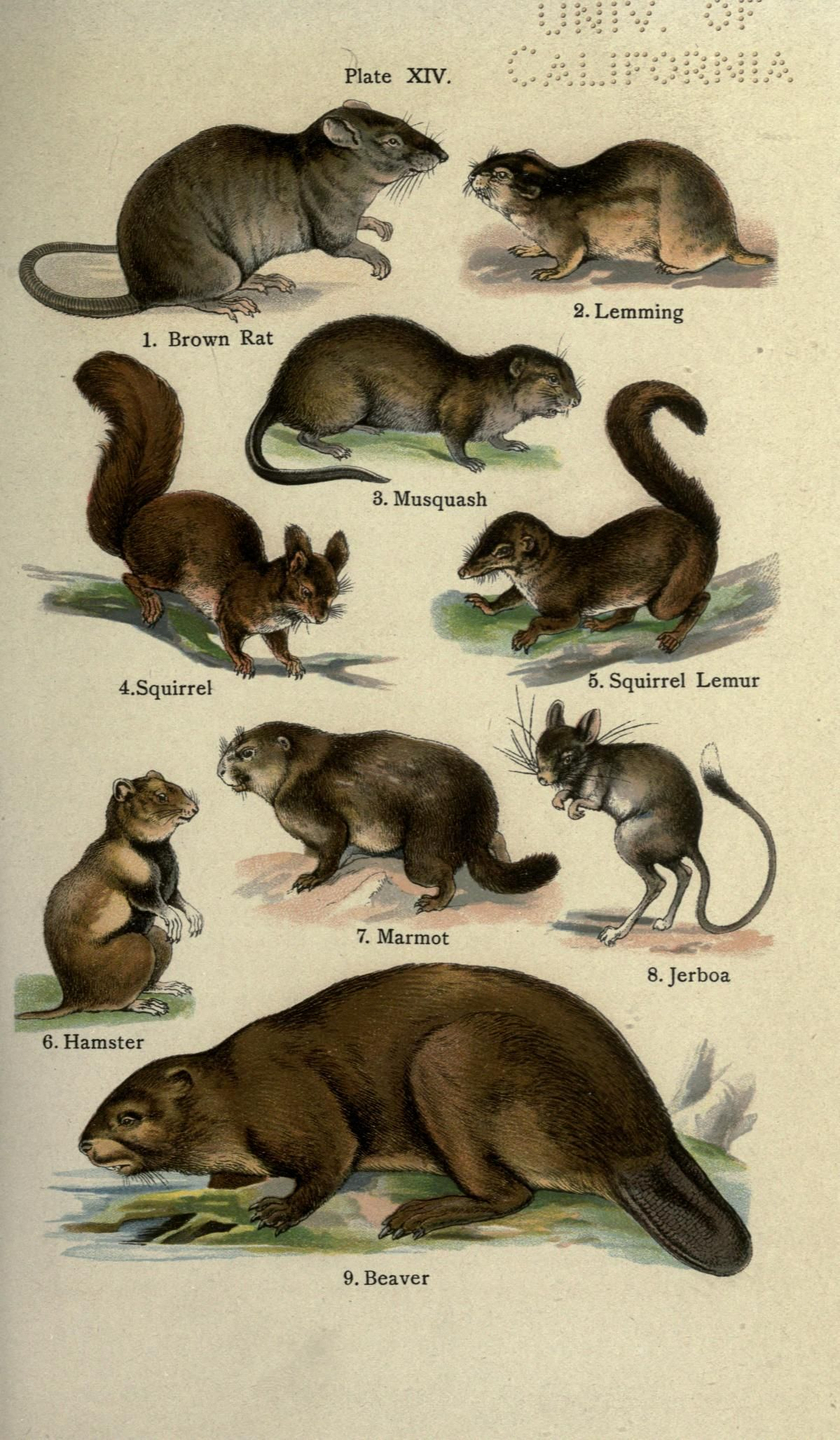 The handy natural history, - Biodiversity Heritage Library