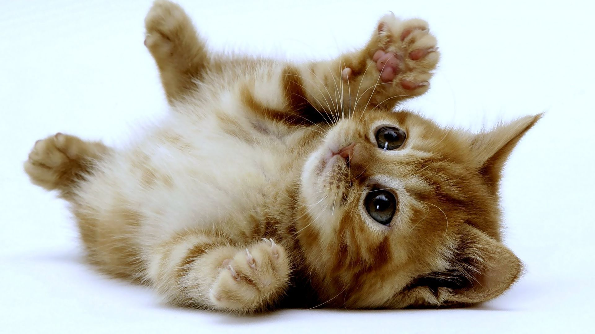Very Cute Kittens Wallpaper 9699 Full HD Wallpaper Desktop - Res .