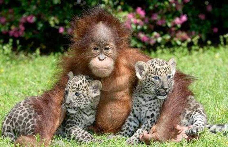 LAS COLECCIONES DE MI VIDA: Fauna