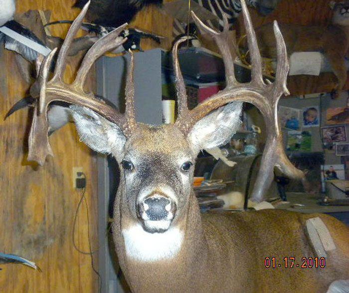 10 Year Old Minnesota Monster Buck Deer Hunting Trophy Room Monster Buck Whitetail Deer Buck Deer