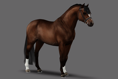 Horse avatar