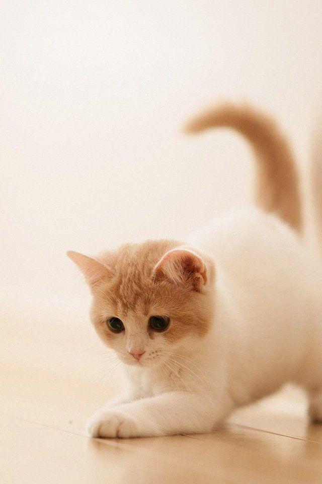 Cute Cat Kitten Animal Iphone 4s Wallpaper Iphone 4 S