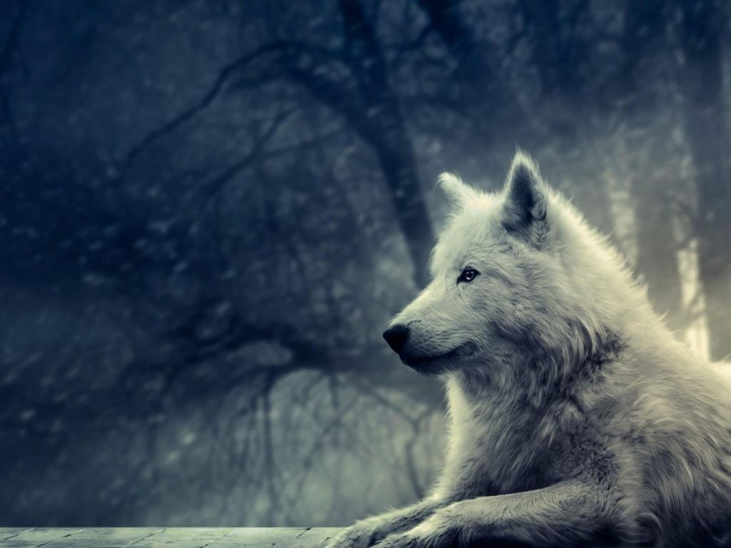 Wolf 4k Wallpapers For Your Desktop Or Mobile Screen Free And Easy To Download Game Of Thrones Ghost Game Of Thrones Wolves Ghost Games