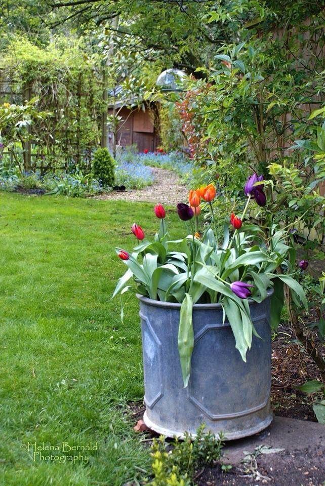 Pin von Easy Breezy Styles auf Gardening that I love   Pinterest ...