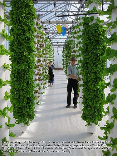 Patio Container Vegetable Garden