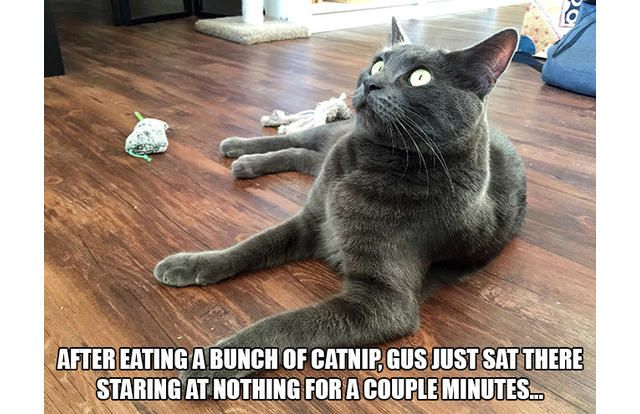 27 Hilarious Photos Of Cats Going Crazy On Catnip (Slide