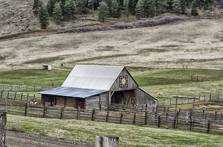 Bettas Barn Homestead