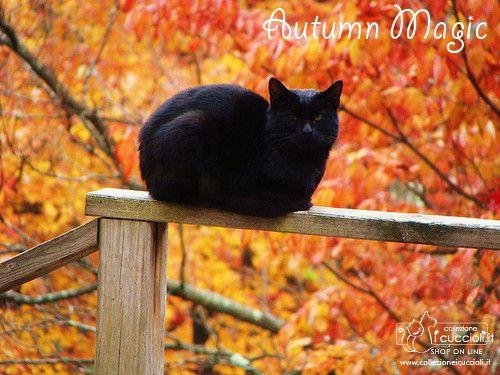 Magnifici #colori fanno da sfondo al tuo #cucciolo in un magico #autunno. Un #gioiello in argento per ricordare l'amore per il tuo #gatto. #Collezione i Cuccioli.