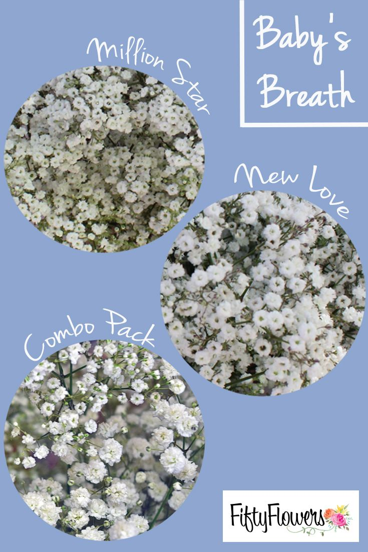 Choose Million Star For A Million Tiny Blooms New Love For Larger And Fluffier Blooms Or Opt For A Com Bridal Shower Flowers Babys Breath Bridal Shower Chair
