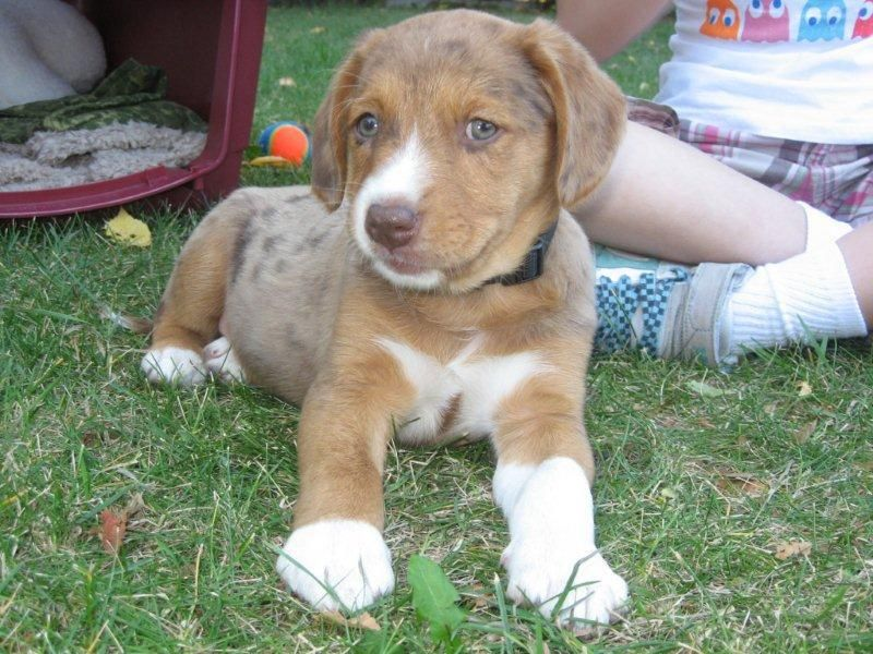 This is by far my favorite mixed breed. Arizona is an